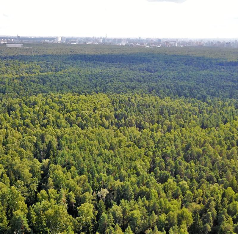"""Лосиный остров с высоты на вертолетной прогулке от Экскурсионного бюро """"Captour"""""""