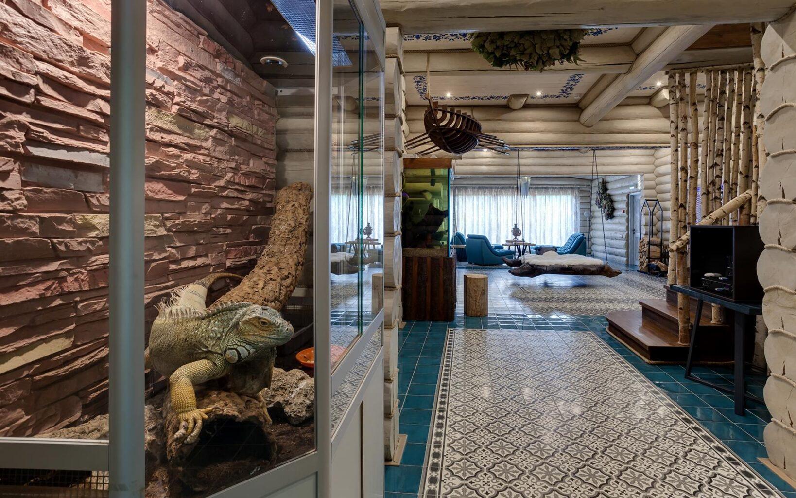 Хамелеон в аквариуме в СПА-клубе Андреевские бани