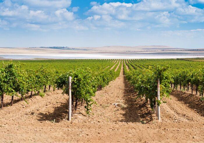 """Панорама винодельни Кубани на экскурсии от Экскурсионного бюро """"Captour"""""""